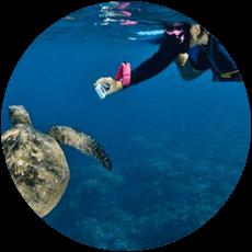 maui-snorkel